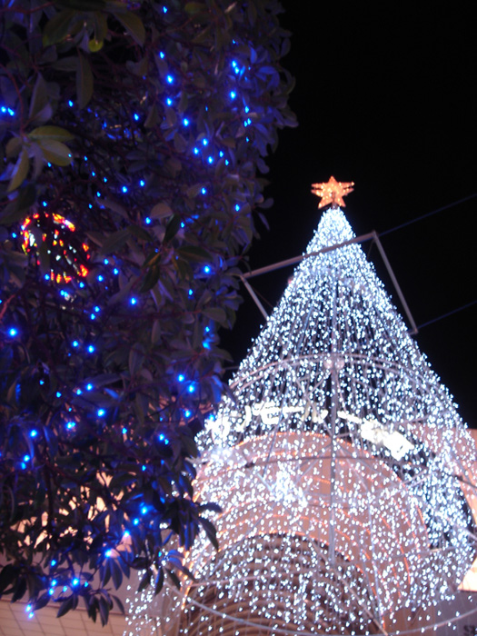 061224 Christmas Tree.jpg
