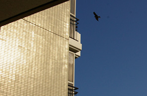 070922 s  鳥.jpg