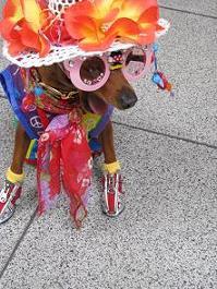 080704 s  お祭り犬.jpg