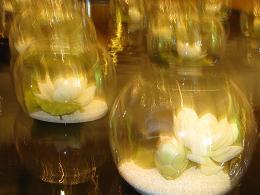 090317  s  蓮の花.jpg