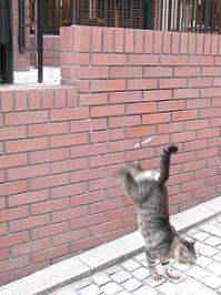 090612  s  cat.jpg