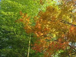 091202  s  Autumn.jpg