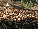 091202  s  Autumn Youka.jpg