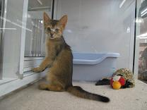 091209  s  kitty.jpg