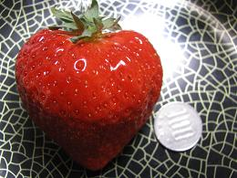 100218  s  berry.jpg