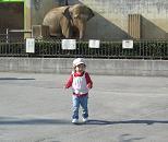 1104  s  elephant.jpg