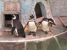 1104  s  penguin2.jpg