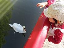 1104  s  swan1.jpg