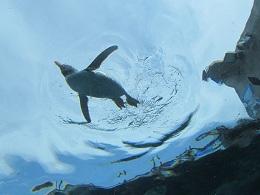 110730   s  penguin1.jpg
