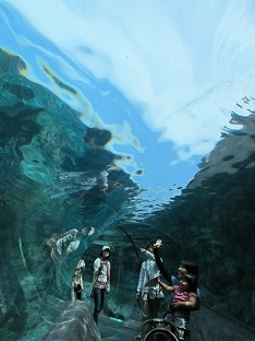 110730  s  aquarium1.jpg