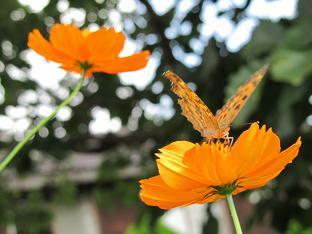 ①100908  s  butterfly1.jpg