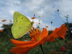 ②100908  s  butterfly.jpg