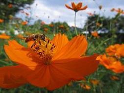 ③100908  s  bee1.jpg