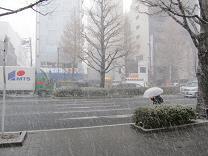 ⑨koiblog 110330 s snowstorm.jpg